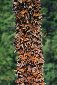 butterflies on trunk