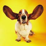 listen_hound