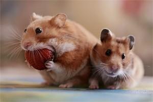eatand diet