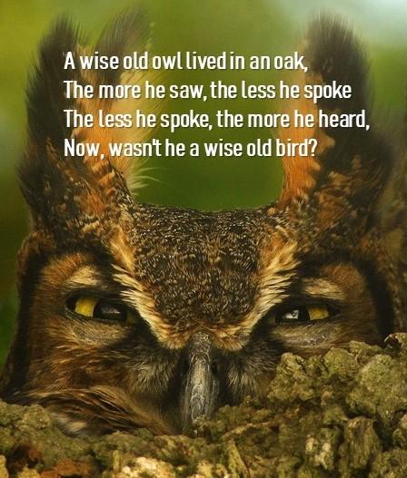 cleaver old bird